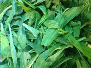 plantain-garbled